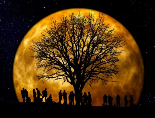 Moon Gardening – Ancient and Biodynamic