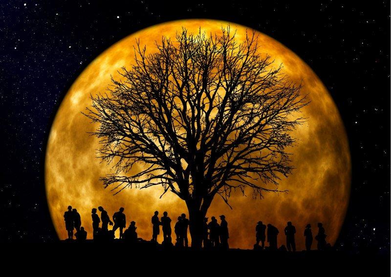 moon lunar gardening biodynamic